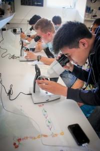 Schule am Meer_mikroskop