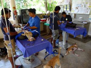 Hundeklinik Sri Lanka