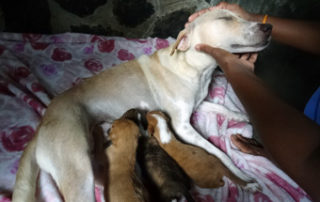 Helfen Hundeklinik Sri Lanka