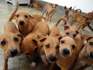Welpen Hundeklinik Sri Lanka