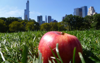 stereotyp big apple