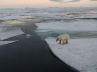 Earth_Hour_Steve_Morello_WWF_Beitragsbild